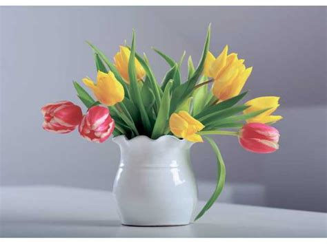 Cut Flower Preservation For Extended Vase by Learn The Best Way To Preserve Fresh Cut Flowers