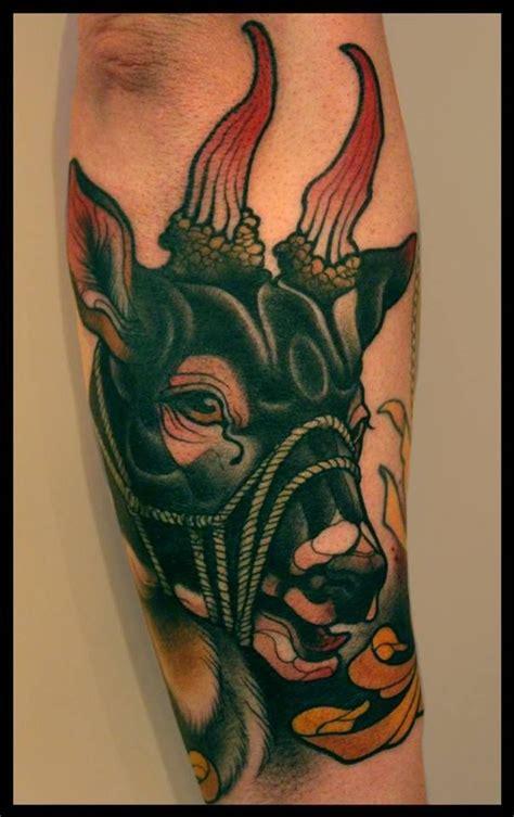 images  tatus animales  pinterest