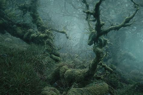 real life enchanted forest    dartmoor