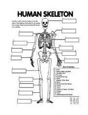 english worksheet skeletal system