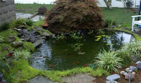 natural backyard pond 13 diy awesome natural backyard pond ideas for all budgets
