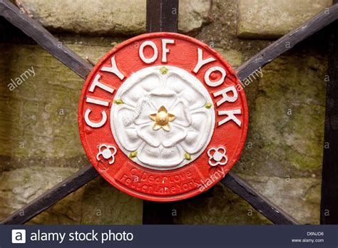house of york the white rose symbol of the house of york the city of york and stock photo royalty