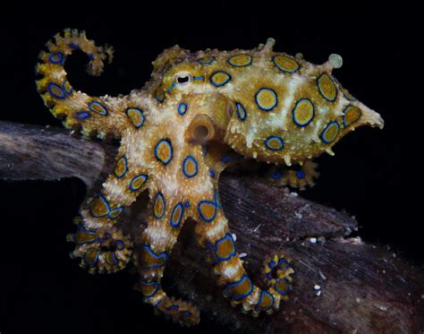 octopus l 7 marine animals that are as single as you feel
