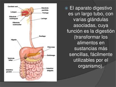 digestivo images aparato que funcion cumple el sistema picture aparato digestivo organos y funciones