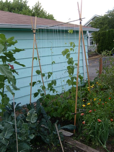 Pole Beans Trellis 301 moved permanently