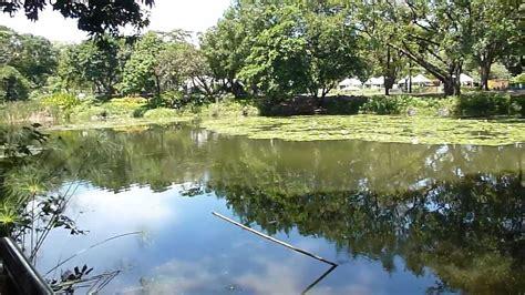 jardin medellin jard 237 n bot 225 nico medell 237 n lago restaurante medell 237 n