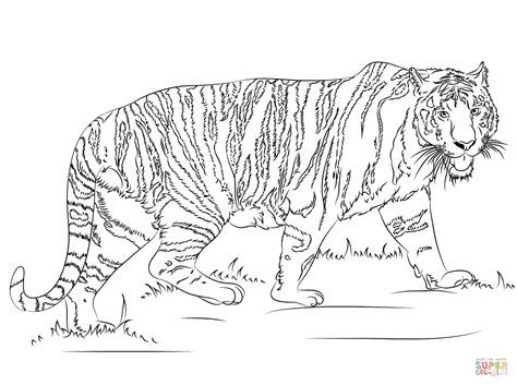 snow tiger coloring page walking tiger coloring page free printable coloring pages