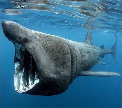 imagenes animales que viven en el mar animales marinos qu 233 son tipos y caracter 237 sticas
