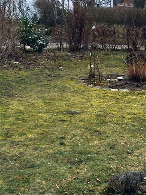 Grasnarbe Entfernen by Rasen Entfernen Wenn Der Rasen Weg Muss Rasen Experte