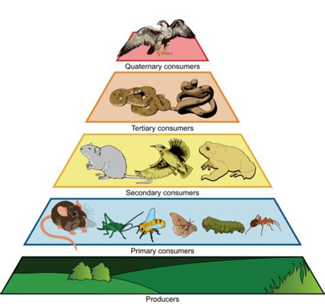 trophic level diagram science prompts middle school science