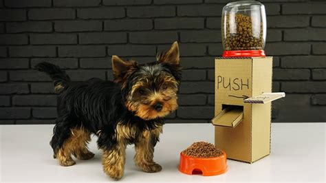 puppy at home diy puppy food dispenser from cardboard at home