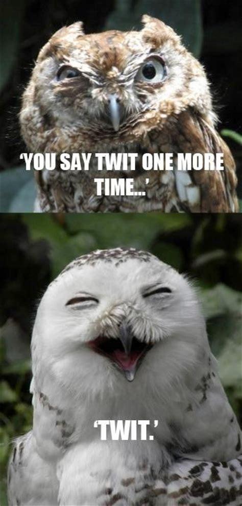 White Owl Meme - best 25 funny owls ideas on pinterest funny owl