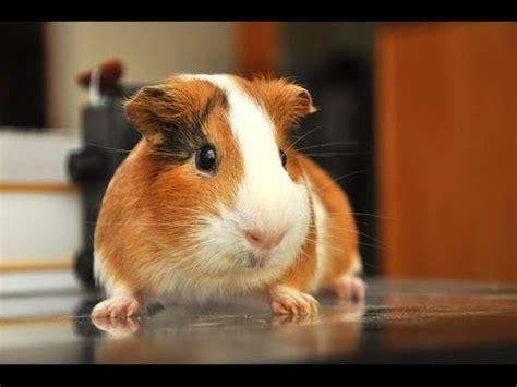imagenes realistas de animales los 10 animales mas tiernos del mundo youtube