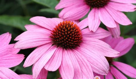 10 exle of perennial plants for garden