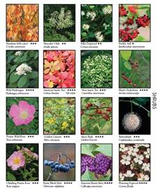this has the names of numerous wild flowers shrubs and vines outdoors pinterest shrubs