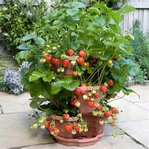 ornamental garden plants ornamental plants
