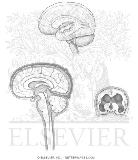 netter coloring book illustrations in anatomy coloring book hansen 1e