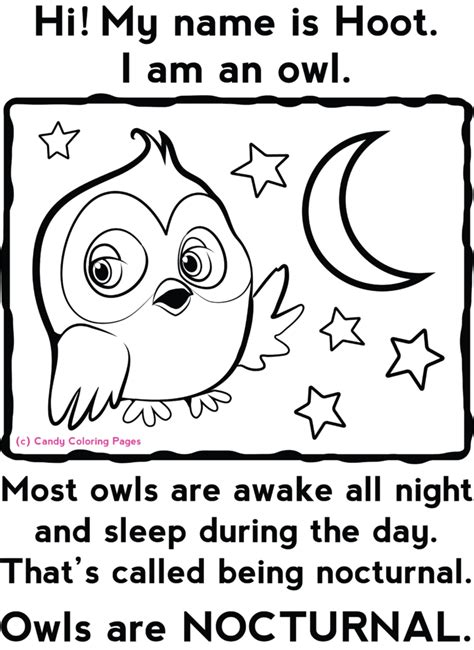 printable nocturnal animal book coloring pages free printable cute animal coloring pages