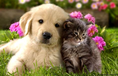 Cutest Cats Pet Pet Pet Product 7 by And Cat Wallpapers Amazing Wallpapers
