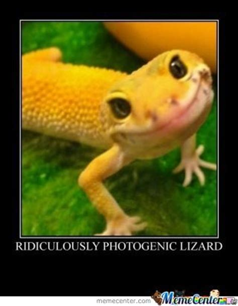 Lizard Toast Meme - lizards funny pet memes pictures to pin on pinterest