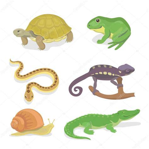 Imagenes Reptiles Vector | reptiles y anfibios conjunto decorativo de cocodrilo