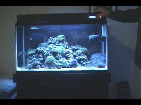 29 gallon fish tank light part 2 my 29 gallon marine salt water aquarium coral reef