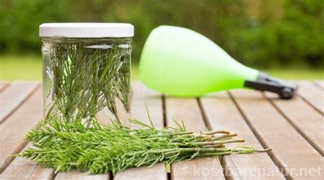 Pilze Im Garten Hausmittel by Die Besten 25 Mittel Gegen Milben Ideen Auf