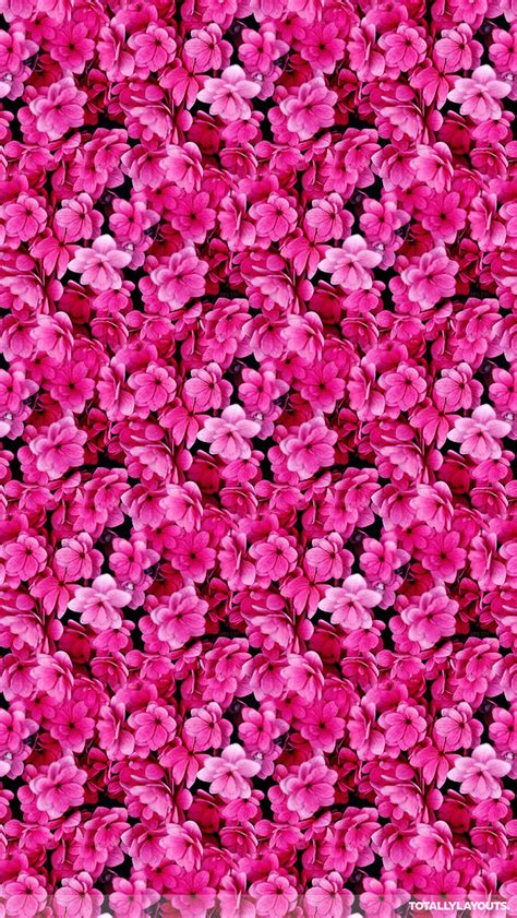 wallpaper flower for whatsapp bright pink flower montage whatsapp wallpaper floral