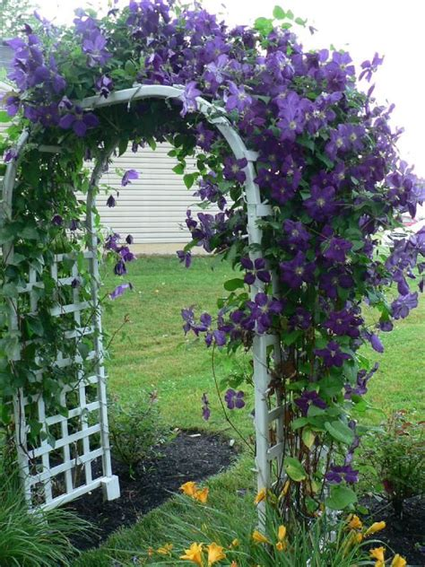 climbing plants sun 17 best ideas about flower vines on trellis