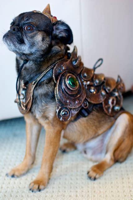 pugs in wars costumes november 2012 lola pug