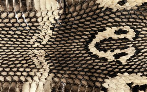 wallpapers snake skin wallpapers cobra snake skin wallpapers cobra snake skin myspace