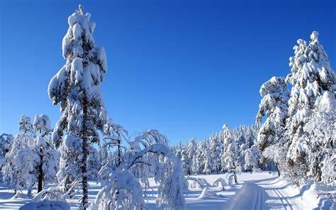 imagenes de paisajes de invierno paisajes hermosos de invierno arboladodeinvierno