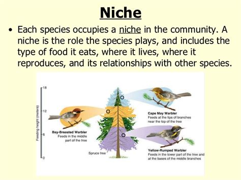 exle of niche what are some exles of an ecological niche socratic