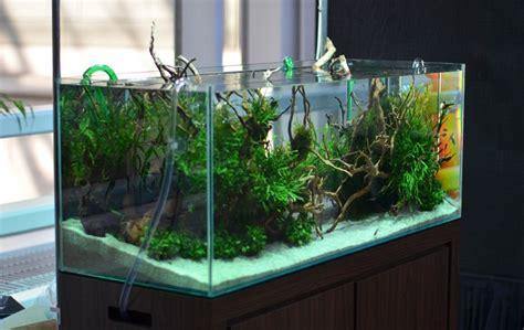 cara membuat filter aquarium tanpa listrik cara membuat aquarium
