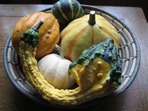 It S Decorative Gourd Season by 187 It S Decorative Gourd Season Motherfuckers Sailing