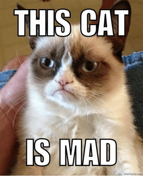 Mad Cat Memes - mad cat memes www imgkid com the image kid has it