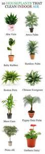 good houseplants good plants for your house house home pinterest
