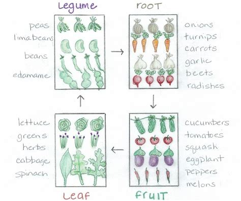 Learn Why Crop Rotation Will Help Improve Your Garden Crop Rotation Home Vegetable Garden