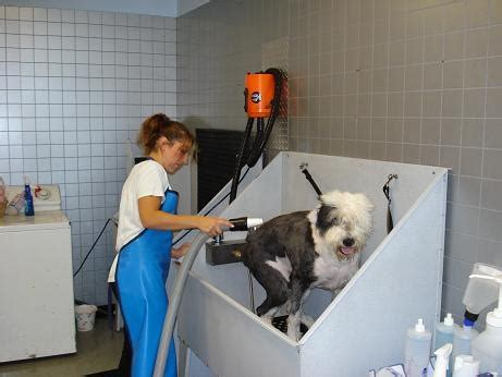 local groomers the groom room local pet canine grooming providers at pets at home ov
