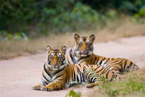 Luxurious Interior by Rajasthan Amp The Tigers Of Madhya Pradesh Holidays 2018