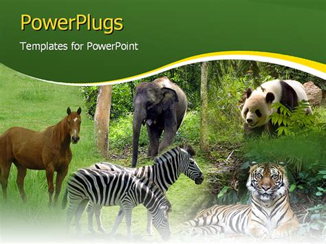 Mammals Wild Animal Best Blog Powerpoint Presentation About Wild Animals Animals Powerpoint Template