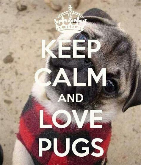 pug things to buy keep calm and a pug pug keep calm pug and