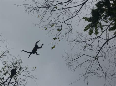 scimmie volanti scimmiette volanti viaggi vacanze e turismo turisti