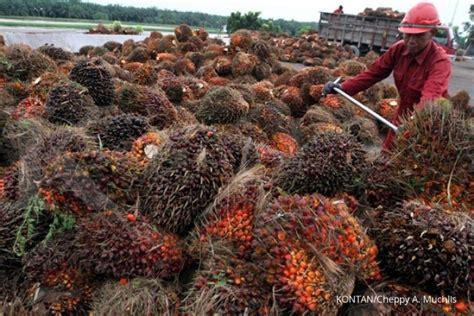 Ekspor Minyak Kelapa Sawit nilai ekspor minyak sawit pada 2015 anjlok 11 6