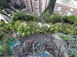 backyard gardens illegal chinese businessman s brazen attempt to cover up illegal