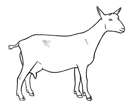 Free Home Plans goat drawings
