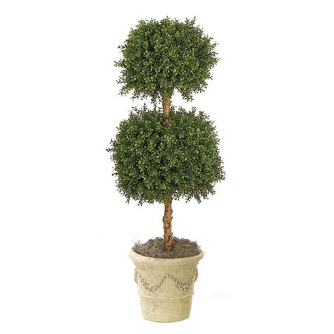 4 foot boxwood double ball topiary potted auv 102770