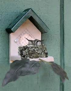 Hummingbird House Plans hummingbird house how to enjoy hummingbirds
