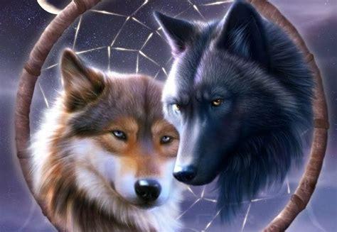imagenes terrorificas de lobos cuentos sobre lobos im 225 genes y fotos