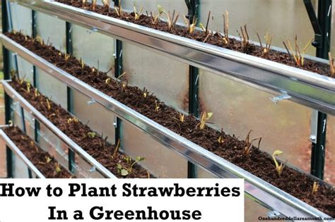 how to plant strawberries in a raised bed the 9 best images about vegetable garden on pinterest